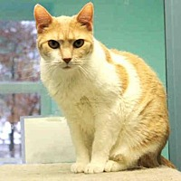 Adopt A Pet :: GUS - Hampton Bays, NY