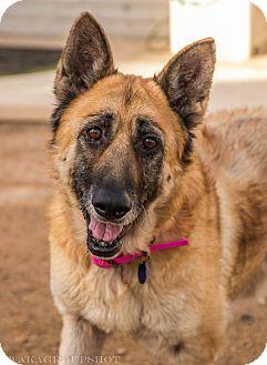 German Shepherd Dog Mix Dog for adoption in Phoenix, Arizona - Nettie