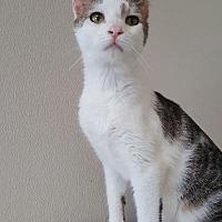 Adopt A Pet :: Vanilla - Fremont, OH