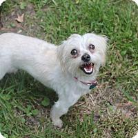Adopt A Pet :: Sophie - Jackson, MS