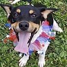 Adopt A Pet :: Camry - No Longer Accepting Applications