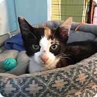 Adopt A Pet :: Chelsey - Savannah, GA