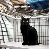 Adopt A Pet :: Tripti - Raleigh, NC