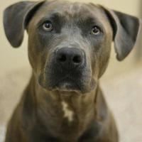 Adopt A Pet :: Boujee - Aiken, SC