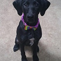 Adopt A Pet :: Raven - Lafayette, IN