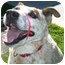 Photo 1 - Australian Cattle Dog Mix Dog for adoption in San Clemente, California - CANDY