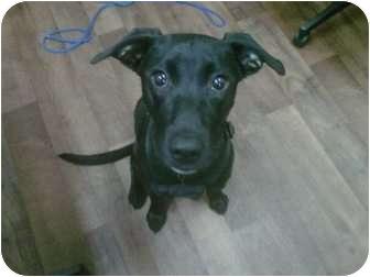 Labrador Retriever Mix Puppy for adoption in Cumming, Georgia - Aeryn