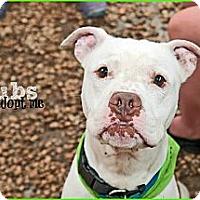 Adopt A Pet :: Bubs - WARREN, OH