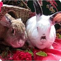 Adopt A Pet :: Babar And Celeste - Huntsville, AL