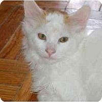 Adopt A Pet :: Sunny - Etobicoke, ON