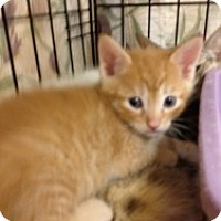 Adopt A Pet :: Andy - Fort Lauderdale, FL