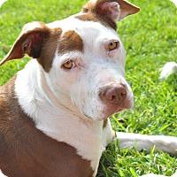 Adopt A Pet :: Mia - Tumwater, WA