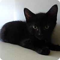 Adopt A Pet :: Kansas - Edmonton, AB