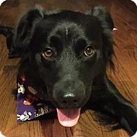 Adopt A Pet :: Major - Mesquite, TX