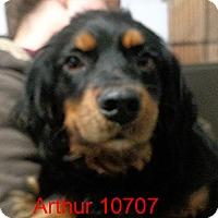 Adopt A Pet :: Arthur - Greencastle, NC