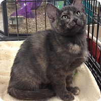 Adopt A Pet :: Cassie - Redondo Beach, CA