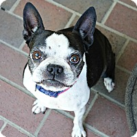 Adopt A Pet :: Jessie - Greensboro, NC