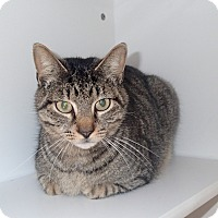 Domestic Shorthair Cat for adoption in Newport, North Carolina - MG
