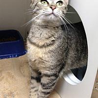 Adopt A Pet :: STRAWBERRY - Putnam Hall, FL