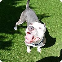 Adopt A Pet :: Prince - Meridian, ID