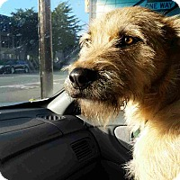 Adopt A Pet :: Willis - Sacramento, CA