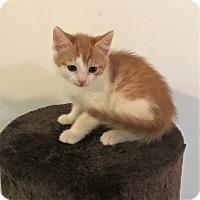 Adopt A Pet :: Lenny - River Edge, NJ
