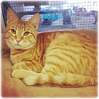 Adopt A Pet :: Chester - Huntington, NY