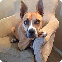 Adopt A Pet :: Coco - Huntington Beach, CA