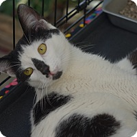 Adopt A Pet :: Periwinkle - Brooklyn, NY