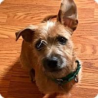 Adopt A Pet :: Kirby - ADOPTED - Livonia, MI