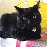 Adopt A Pet :: Smokey - Cumberland, ME