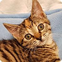 Adopt A Pet :: Daisy- RC Petsmart - Rancho Cucamonga, CA
