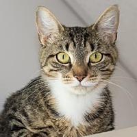 Adopt A Pet :: Zenyatta - Binghamton, NY