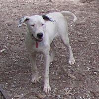 Adopt A Pet :: Milky Way - Oakland, AR