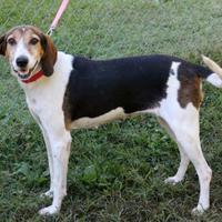 Adopt A Pet :: Jesse - Dalton, GA