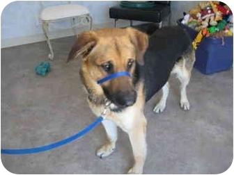 German Shepherd Dog Mix Dog for adoption in Rock Springs, Wyoming - Lorado