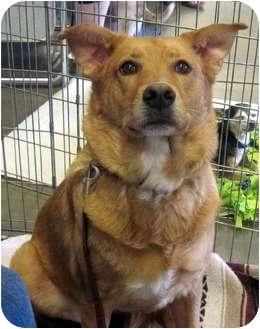 Labrador Retriever Mix Dog for adoption in Overland Park, Kansas - Jolie