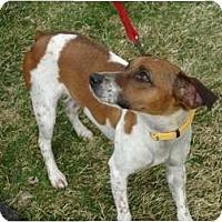 Adopt A Pet :: Neighbor - Toronto/Etobicoke/GTA, ON
