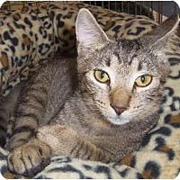 Adopt A Pet :: Jackson - Orlando, FL