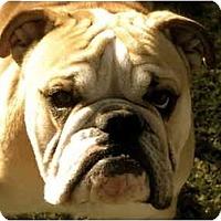 Adopt A Pet :: Uno*adoption pending!* - Gilbert, AZ