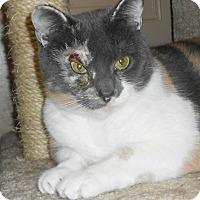 Adopt A Pet :: Lilac - Chesapeake, VA