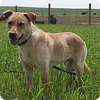 Adopt A Pet :: Rhett - Russellville, KY