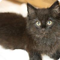Adopt A Pet :: Blackberry - Canoga Park, CA