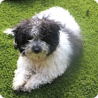 Adopt A Pet :: Pockets - Norwalk, CT