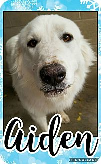 Great Pyrenees Mix Dog for adoption in Edwards AFB, California - Aiden