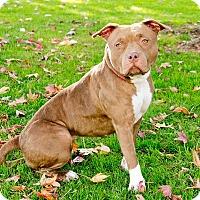 Adopt A Pet :: Grace - Marina del Rey, CA