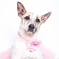 Adopt A Pet :: Helen - Stockton, CA