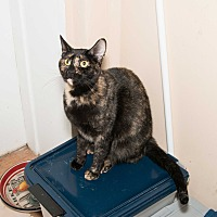 Adopt A Pet :: Jewel - Chicago, IL