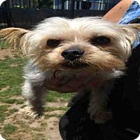 Adopt A Pet :: *OLAF - Long Beach, CA