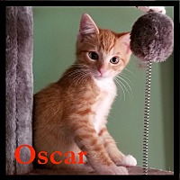 Adopt A Pet :: Oscar - Great Mills, MD